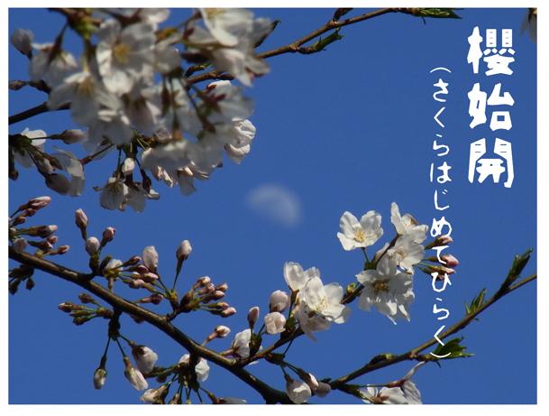 桜初めて咲くR0161935.jpg