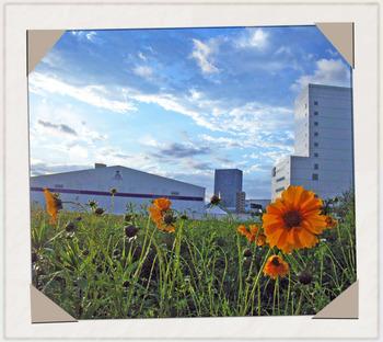 20060520雨上がりのタンク花.jpg