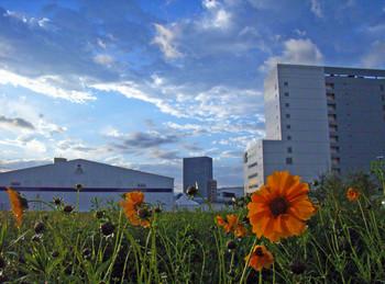 20060520TANK花畑.jpg