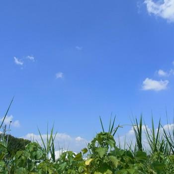夏草R0156148.jpg