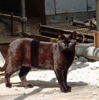 待て猫DSCN6570.jpg