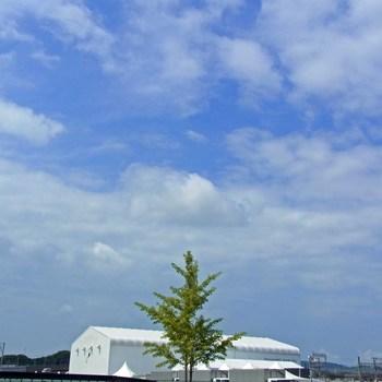 木とshipR0154569.jpg