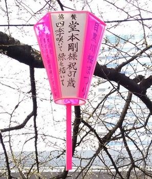桜提灯.jpg