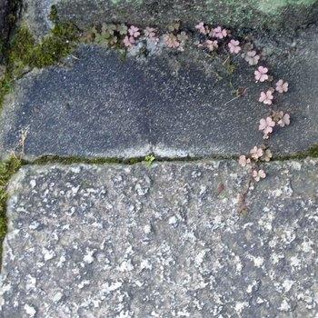 石畳R0154749.jpg