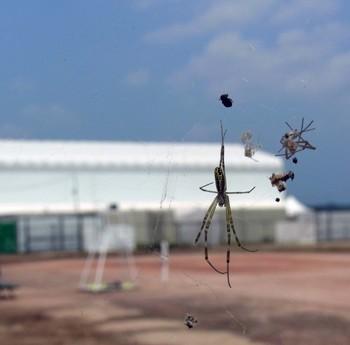 蜘蛛雲R0155093.jpg