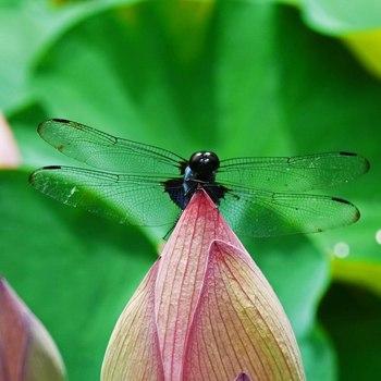 蜻蛉R0153997.jpg