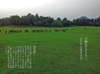 鹿お食事中.jpg