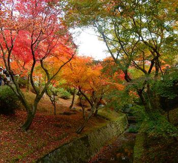 tofukujiDSCN4868.jpg