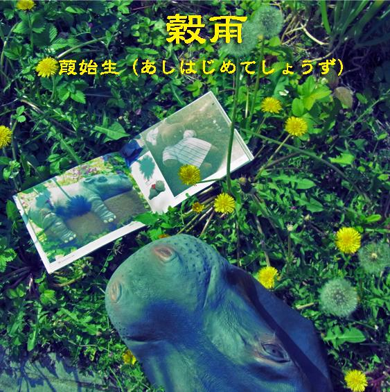 穀雨ヒポミタンポポR0163034.jpg
