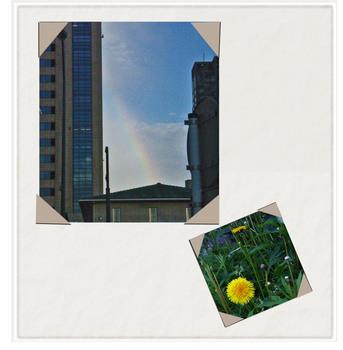 20060520虹タンポポタンク.jpg
