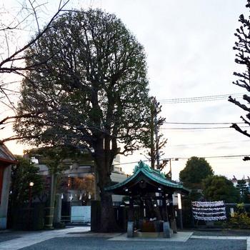 氷川神社.jpg